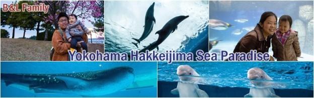 Yokohama Hakkeijima Sea Paradise – Aquarium สุดเจ๋งที่ไม่อยากให้พลาด